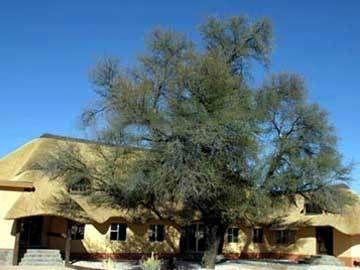 Hammerstein Lodge & Camp Sesriem - dream vacation