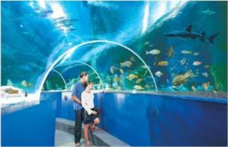 Blue Reef Aquarium Portsmouth - dream vacation
