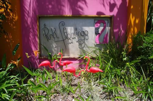 Pink Flamingo - dream vacation