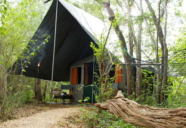 Mahoora Tented Safari Camp - Sinharaja - dream vacation