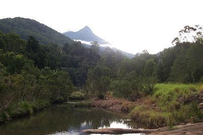 Mount Warning Forest Hideaway