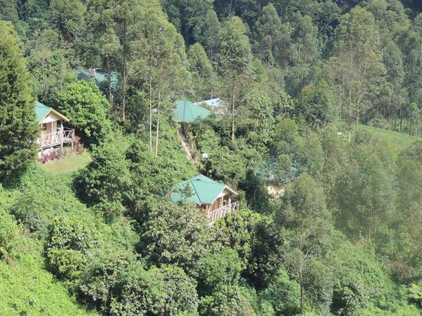 Gorilla Safari Lodge - dream vacation