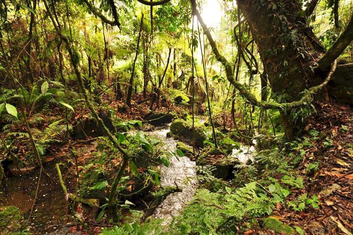 Sanctuary Gorilla Forest Camp-10
