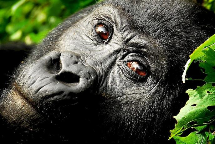 Sanctuary Gorilla Forest Camp-14