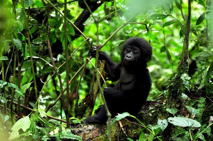 Sanctuary Gorilla Forest Camp-15