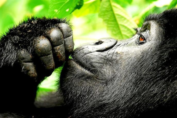 Sanctuary Gorilla Forest Camp-16