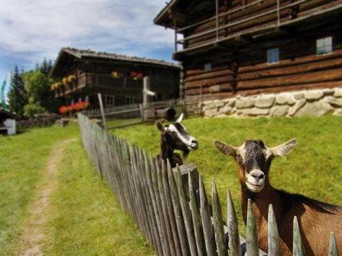 Hotel Edelweiss Wagrain - dream vacation