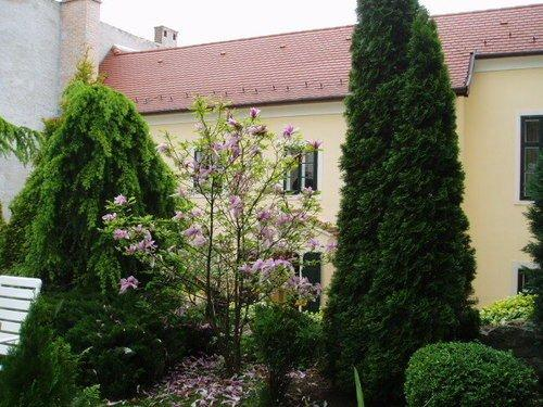 Hotel Wollner - dream vacation