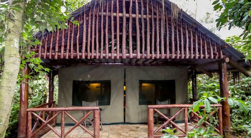 Kibale Forest Camp - dream vacation