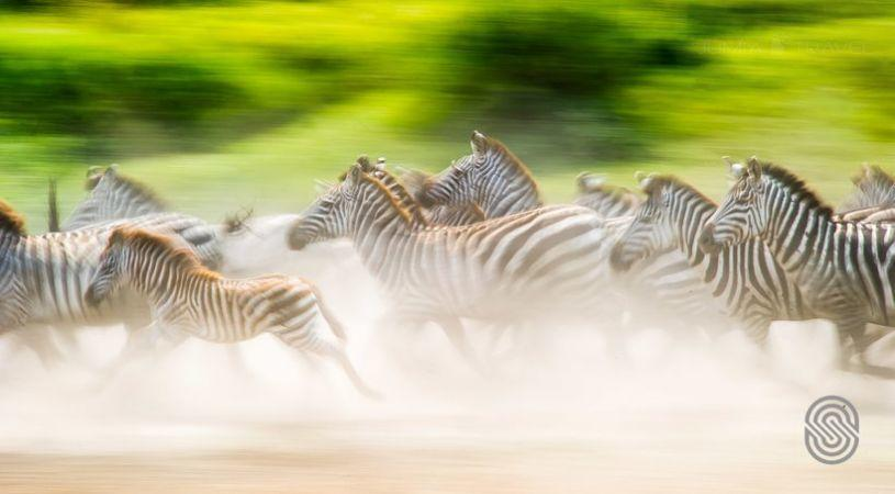 Serengeti Serena Safari Lodge - dream vacation