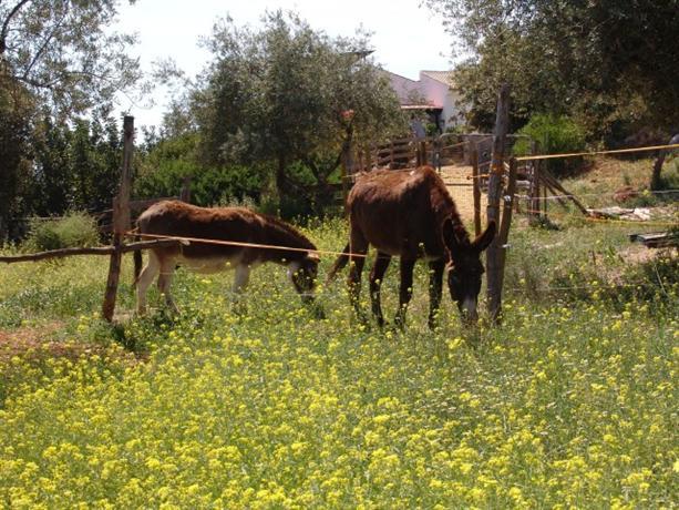Homestay in Comares near Church of La Encarnacion - dream vacation