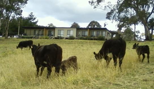 Bumblebrook Farm Motel