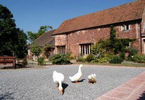 Gurney Manor Mill Bed & Breakfast Bridgwater - dream vacation