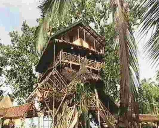 Treehouse Village Resort - dream vacation